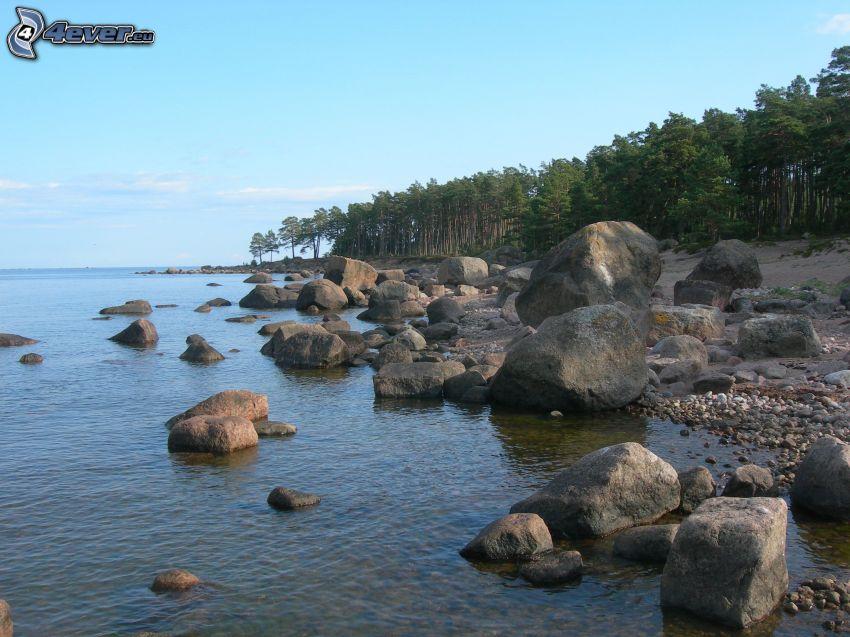 coast, rocks, forest