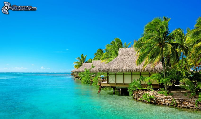 houses on the water, open sea, palm trees