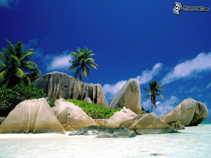 La Digue, Seychelles, palm trees, sea