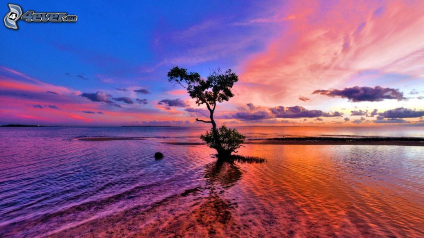 lonely tree, sea, sky