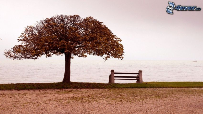 open sea, lonely tree, bench