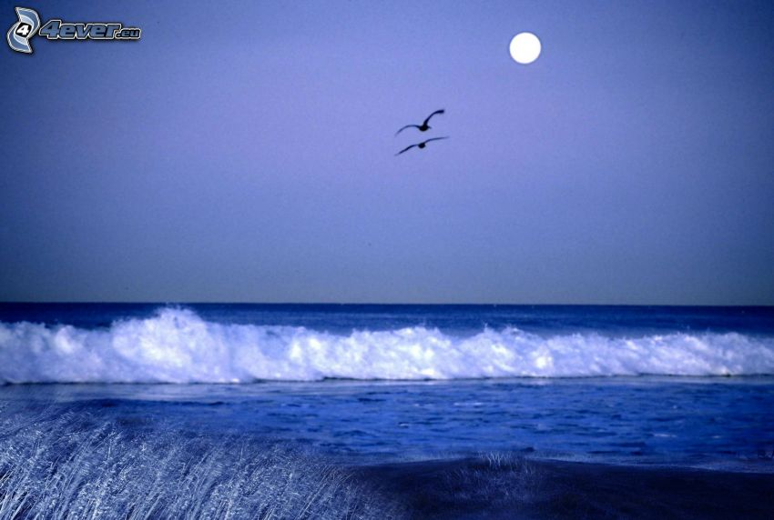 open sea, waterfall, birds, moon