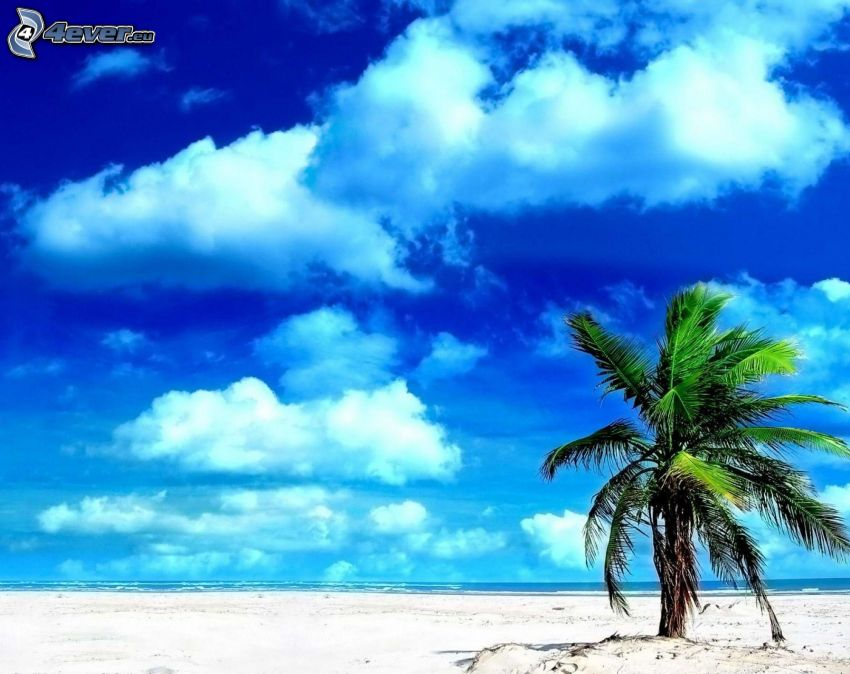 palm tree over sandy beach, clouds