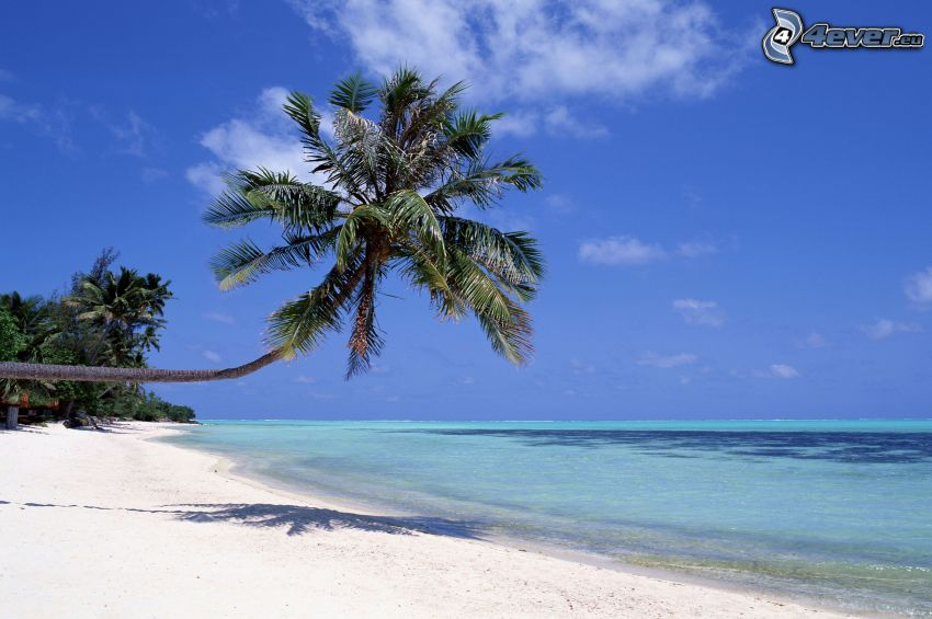 palm tree over sandy beach, sea, island