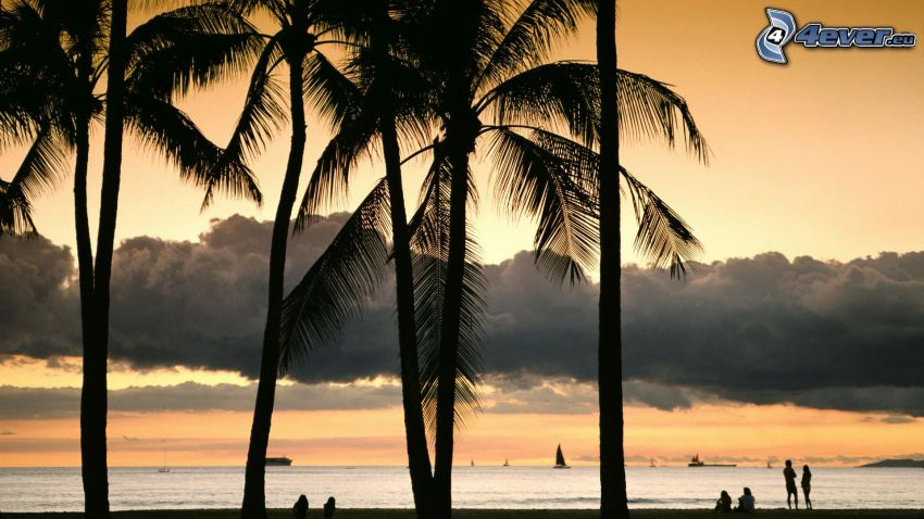 palm trees, sea, evening sky