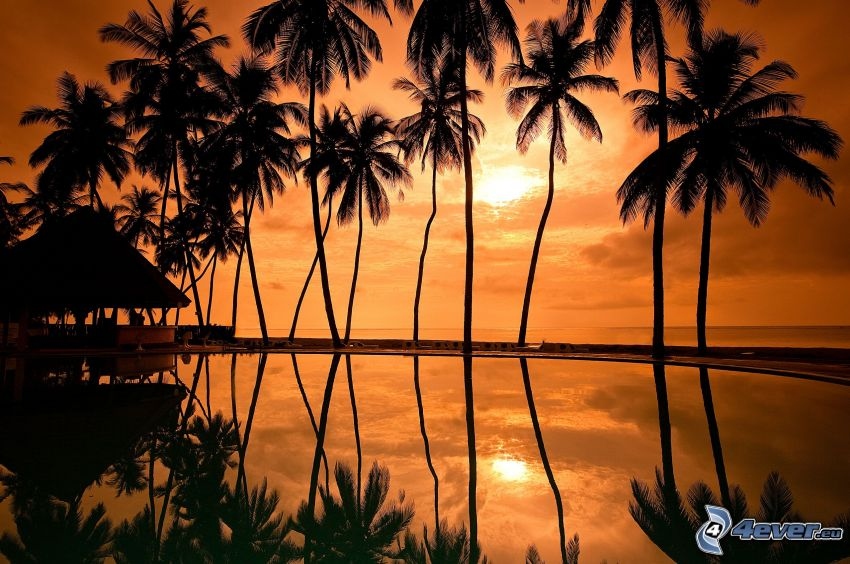 palm trees, silhouettes of the trees, sunset over the sea, orange sky