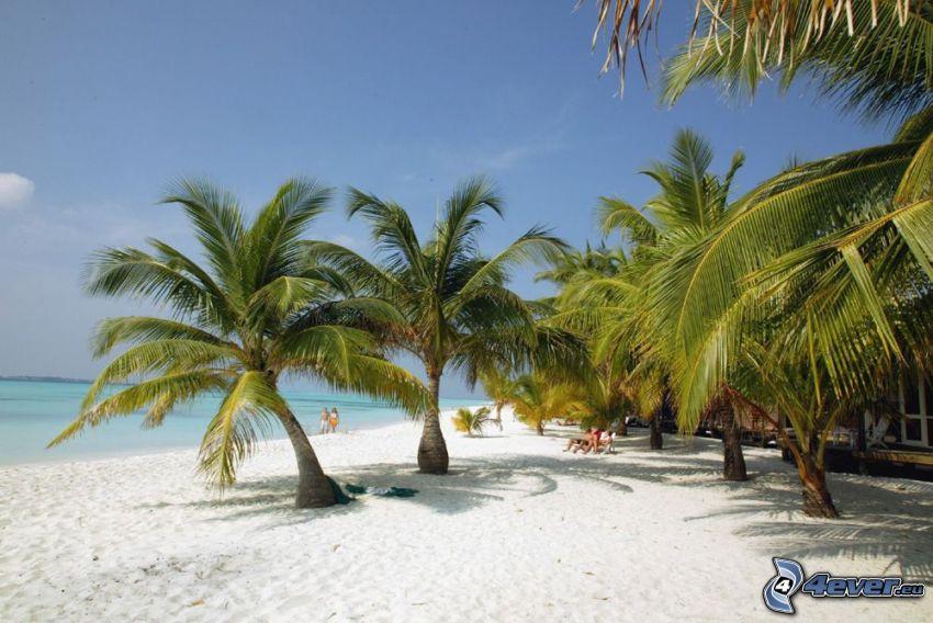 palm trees at sea, beach