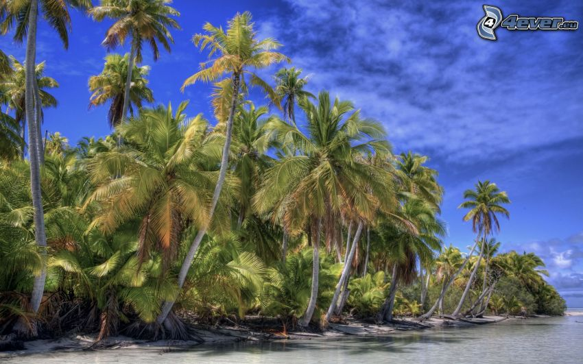 palm trees at sea, coast, HDR