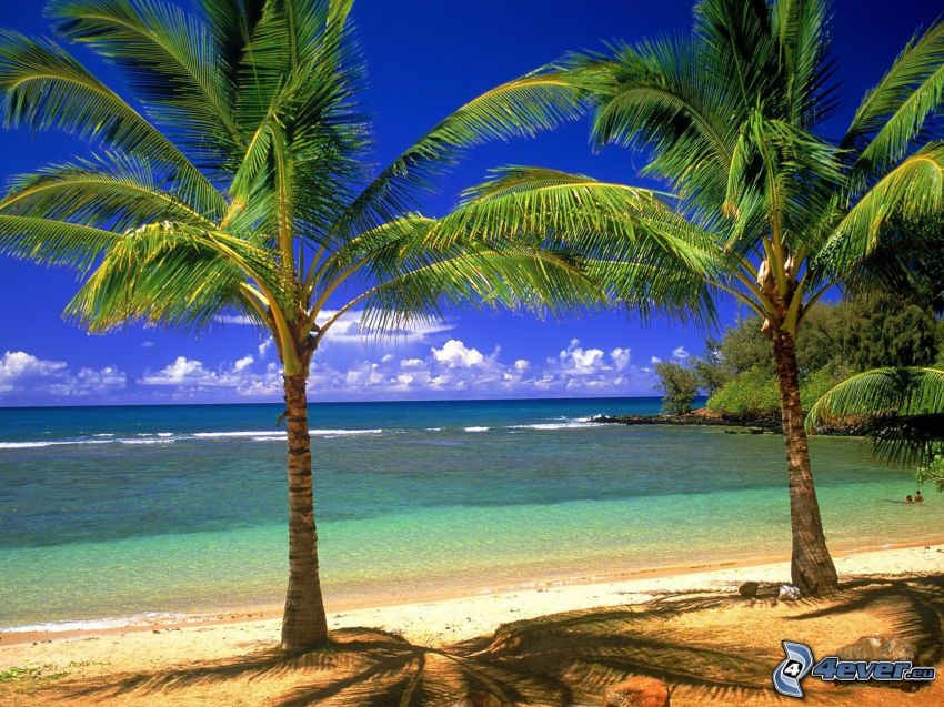 palm trees on the beach, coast, sea