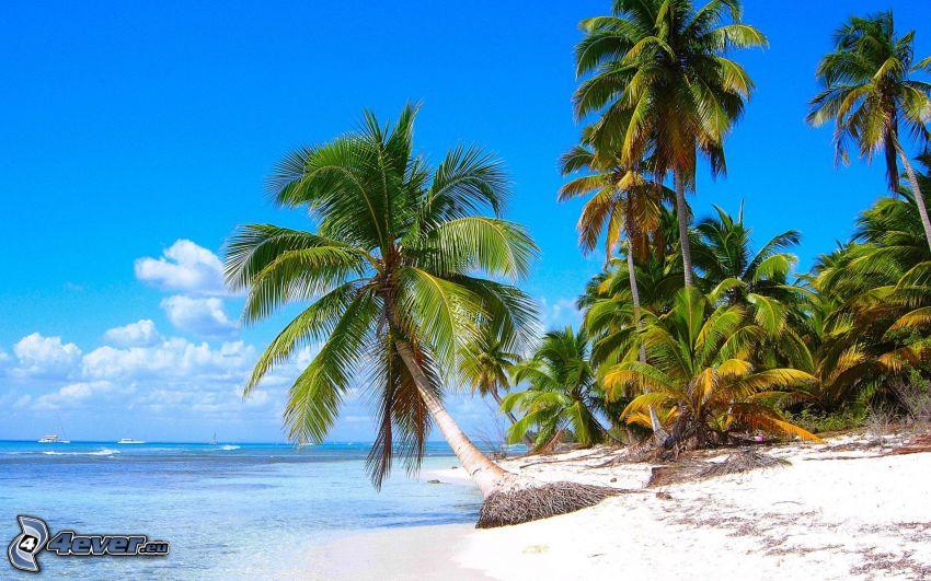 palm trees on the beach, open sea