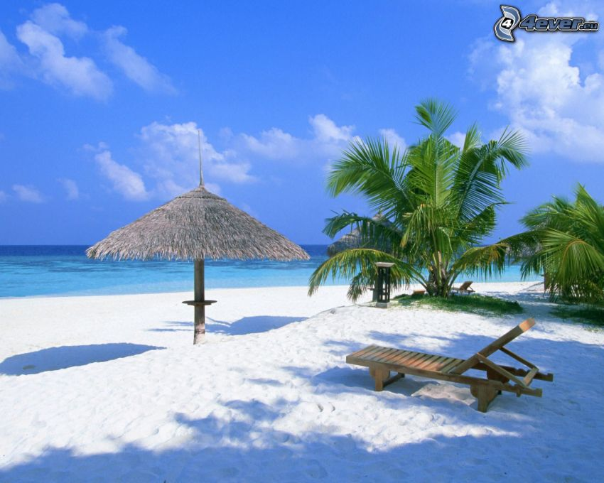 parasol on the beach, deck chair, palm trees