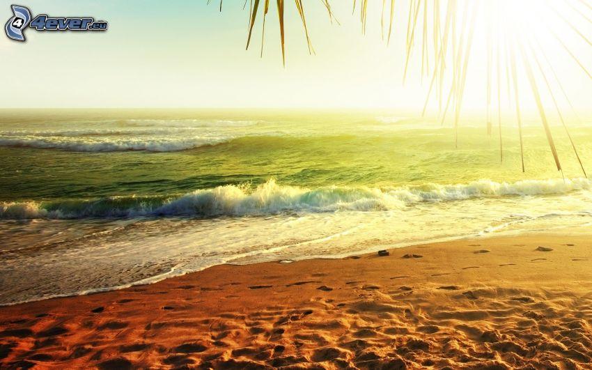 sandy beach, green sea, sunset over the sea, wave, palm leaf