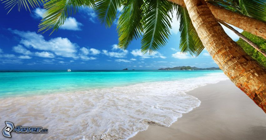 sandy beach, palm trees, open sea