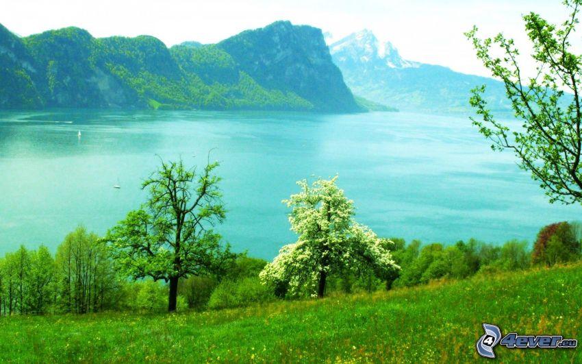 sea, flowering tree, grass