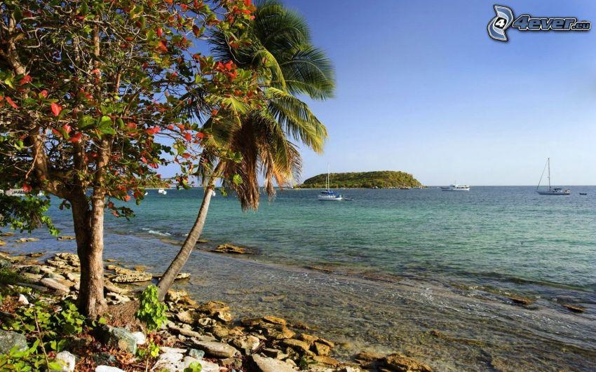 sea, palm trees, island