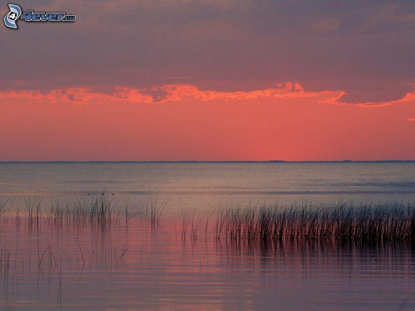 sea, pink sky