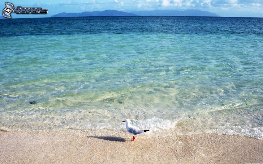seagull, beach, sea