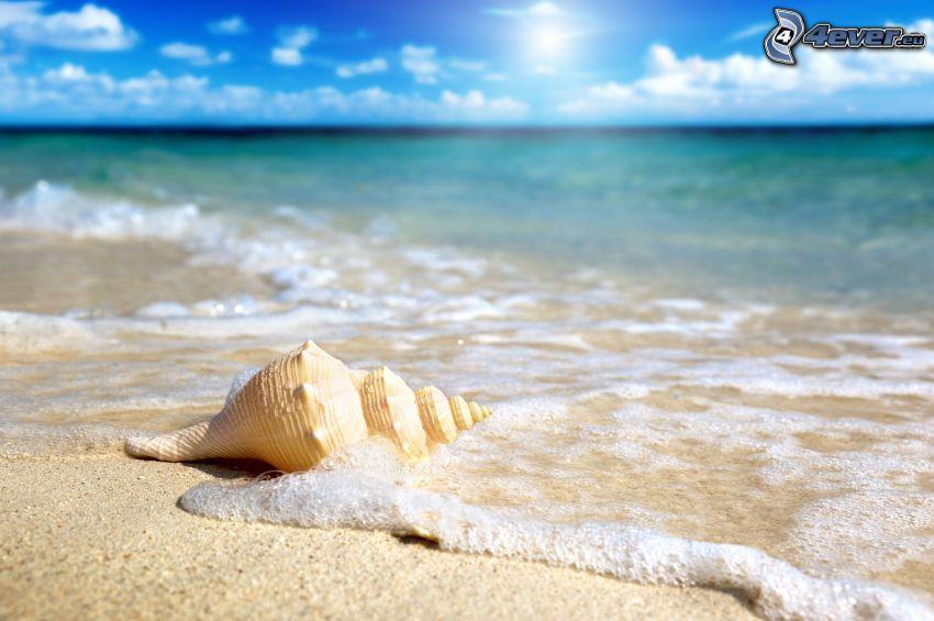 shell, sandy beach, sea