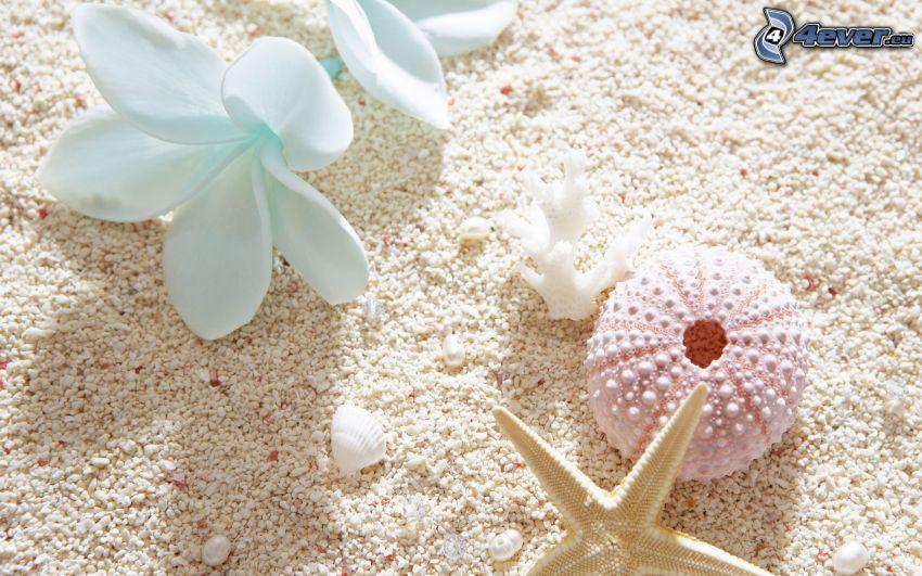 shells, sand