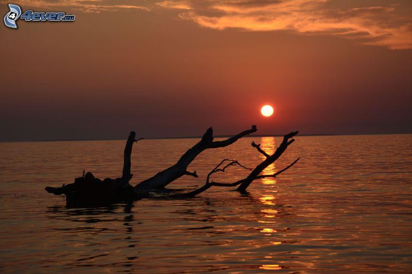 sunset at sea, wood