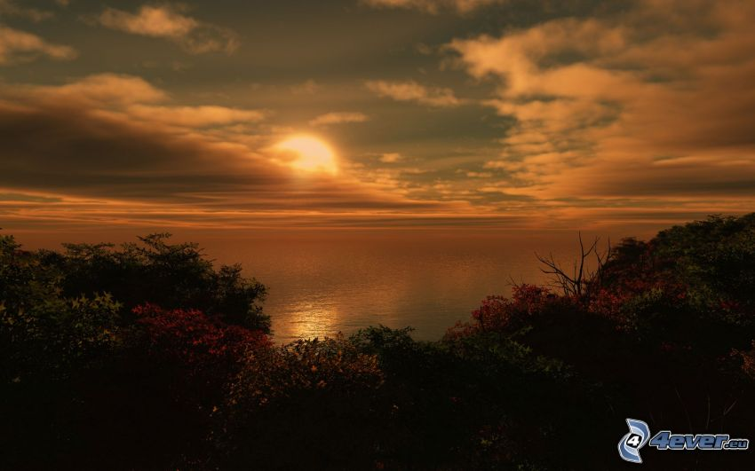 sunset behind the sea, bushes, the view of the sea