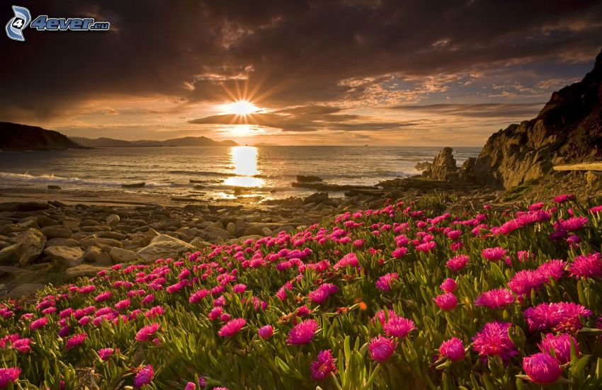 sunset behind the sea, pink flowers, rocky coastline, dark clouds over the sea