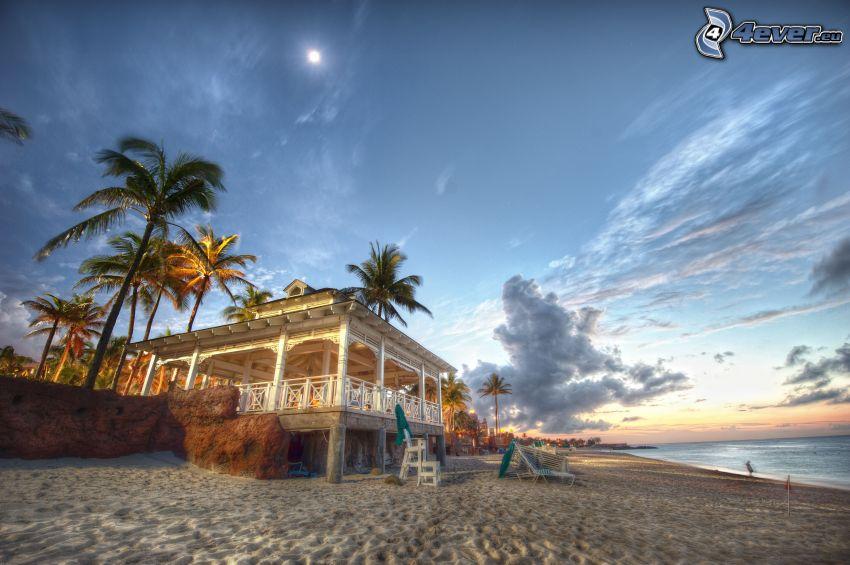 terrace, sandy beach, palm trees, sea, HDR