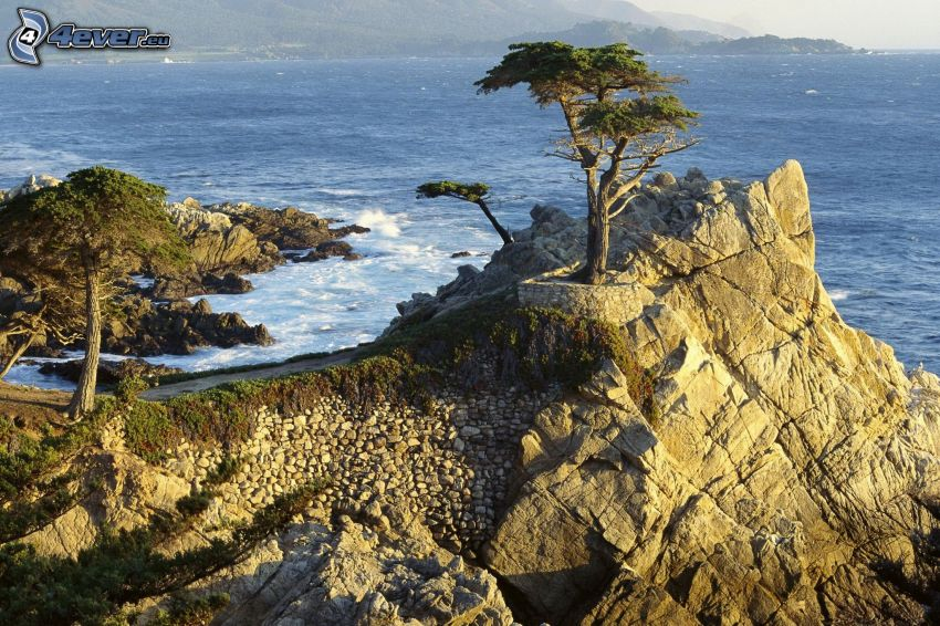 tree on a rock, sea