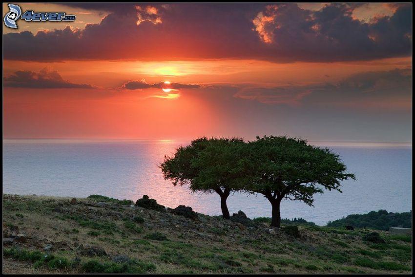 trees, orange sunset over the sea, spreading tree