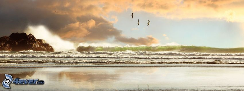 waves on the shore, beach, sea, clouds, birds
