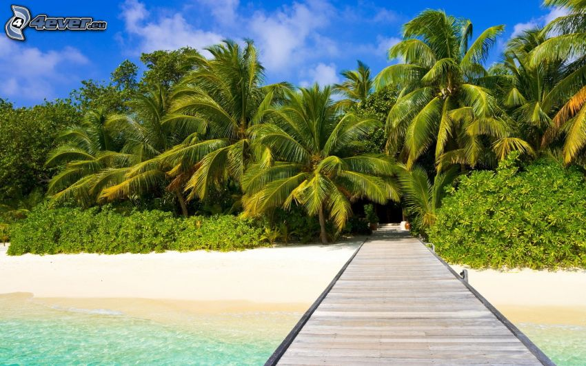 wooden pier, palm trees, greenery, sand