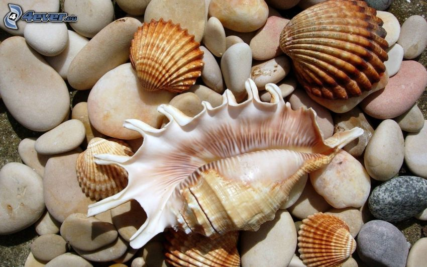 shells, rocks
