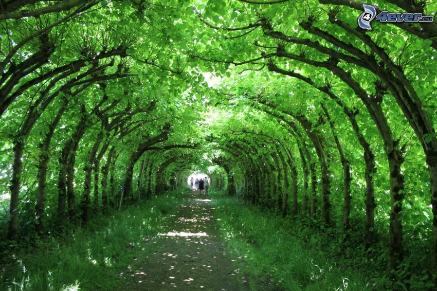 sidewalk, avenue of trees, green tunnel, couples