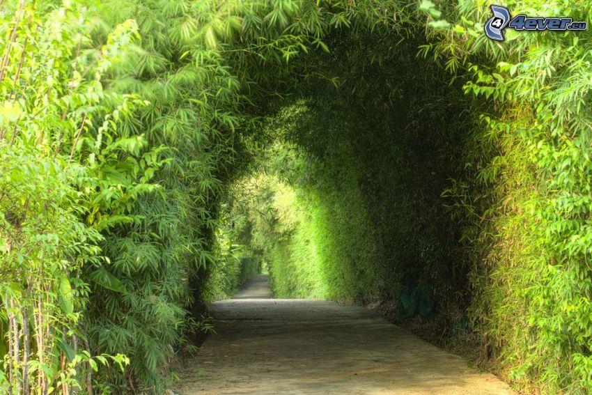 sidewalk, green trees, green tunnel