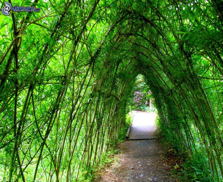 sidewalk, green tunnel