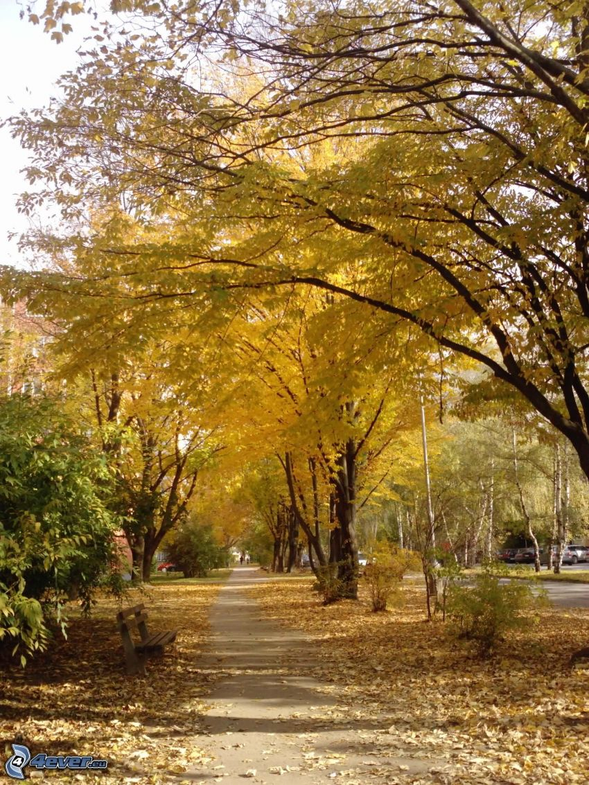 sidewalk, yellow trees, dry leaves, bench, city