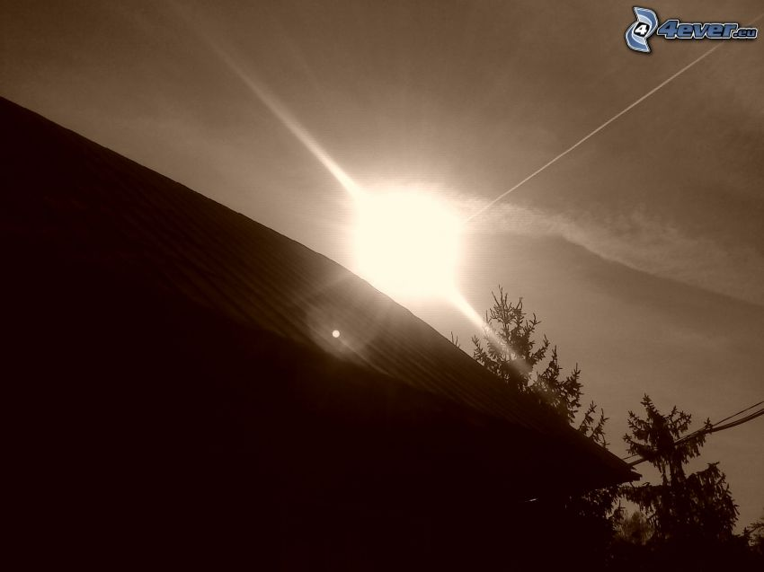 silhouette, roof, coniferous trees, sun, black and white photo, contrail