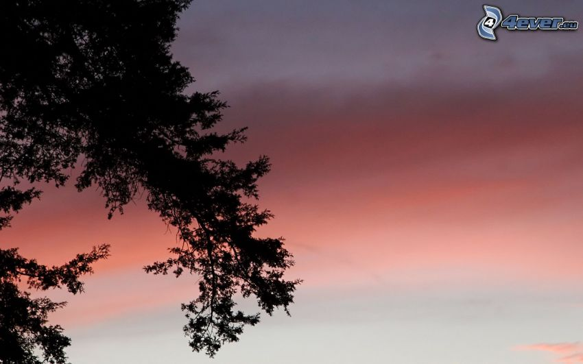 silhouette of tree, evening sky