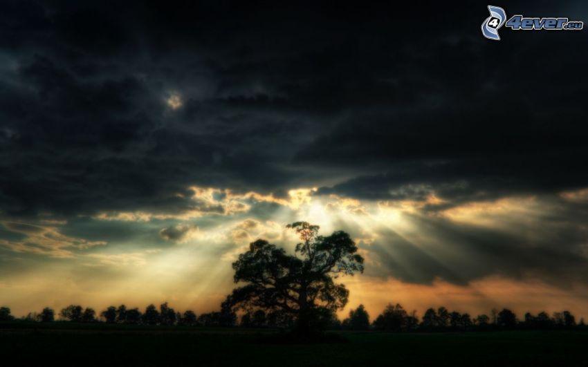 silhouette of tree, sunbeams, sun behind the clouds, dark sky
