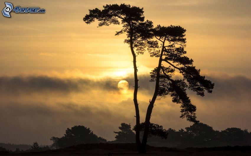 silhouette of tree, sunset