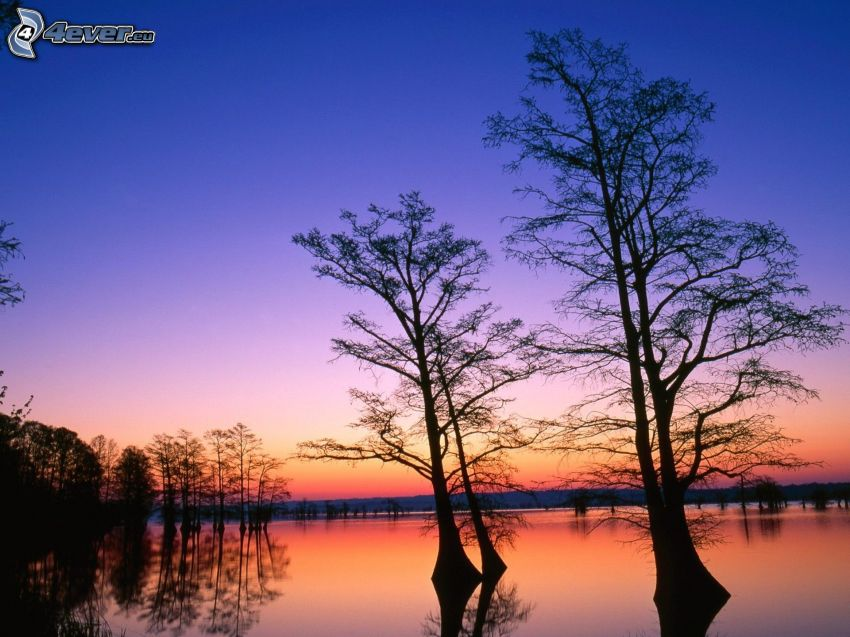 silhouettes of the trees, lake, evening sky