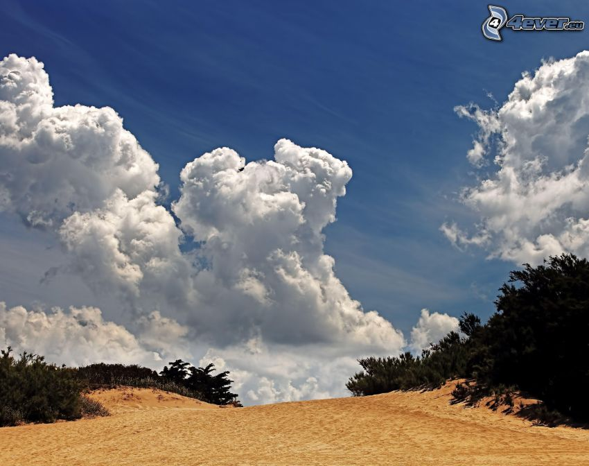 clouds, sand, trees