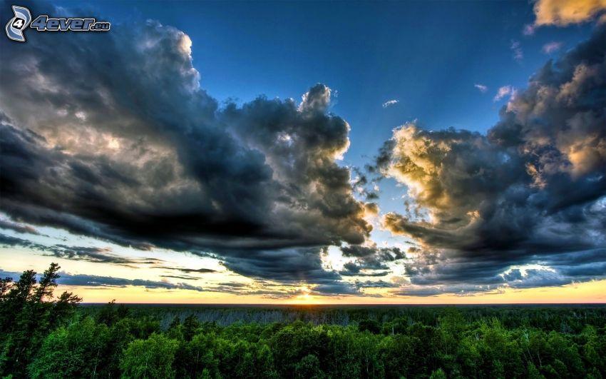 dark clouds, forest