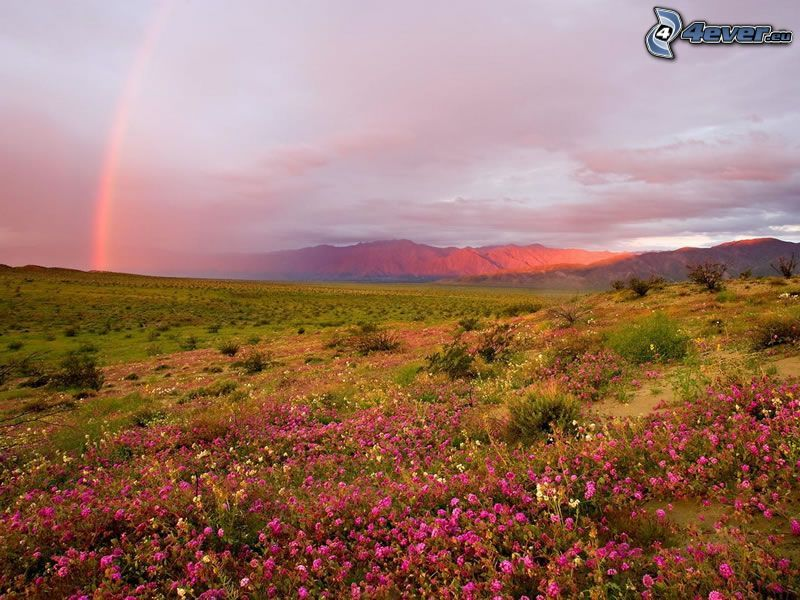 rainbow, pink flowers