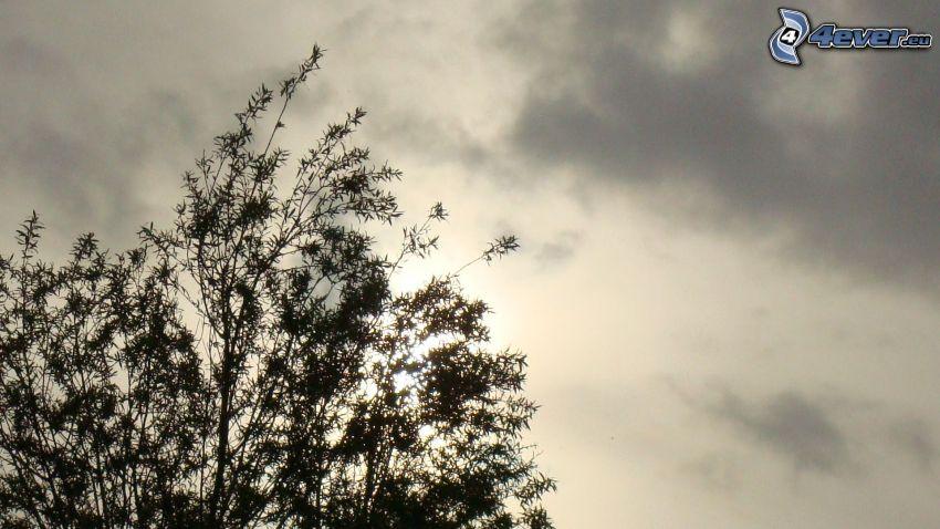 silhouette of tree, sky