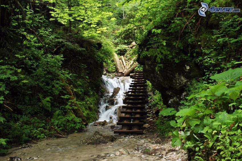 Slovak Paradise, ladder, waterfall in the forest