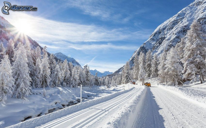 snow-covered road, snowy trees, sun