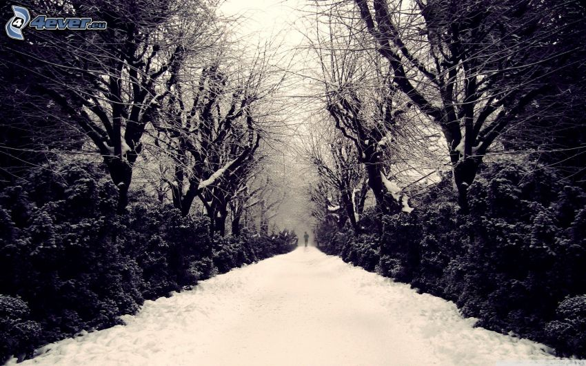 snow-covered road, snowy trees
