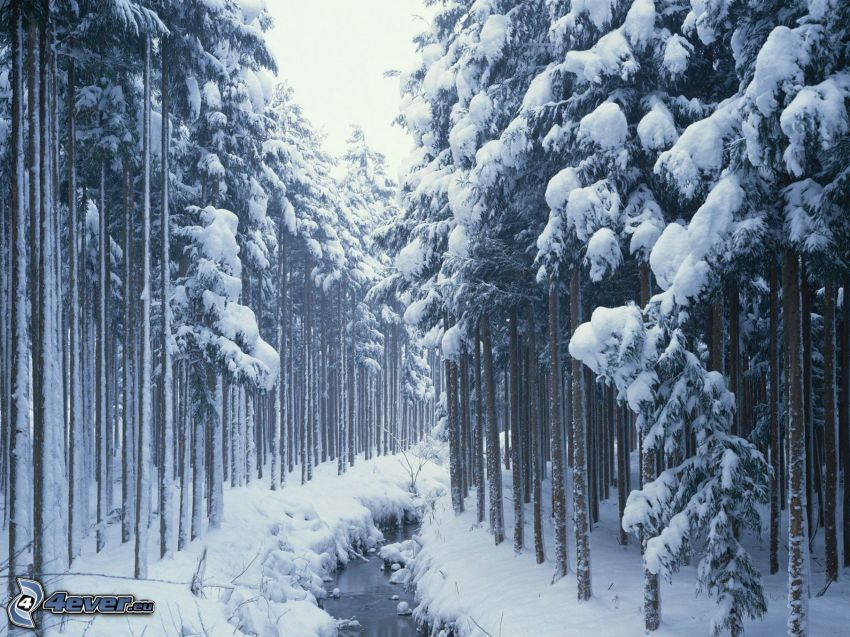 snowy forest, forest creek
