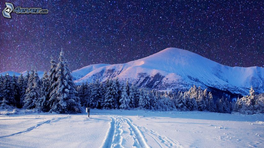 snowy landscape, snowy forest, snowy hill, tracks in the snow, stars